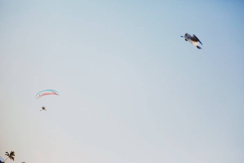 A group of people flying a kite